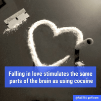Facts Love Drugs Cocaine Relationship Awesome Bestof: Falling in love stimulates the same  parts of the brain as using cocaine  @FACTS l guff com Facts Love Drugs Cocaine Relationship Awesome Bestof