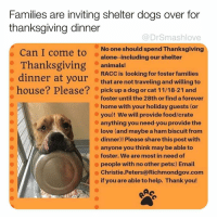 Being Alone, Animals, and Bless Up: Families are inviting shelter dogs over for  thanksgiving dinner  @DrSmashlove  No one should spend Thanksgiving  alone--including our shelter  Can I come to  Thanksgiving  dinner at your  house? Please?  animals!  RACC is looking for foster families  that are not traveling and willing to  pick up a dog or cat 11/18-21 and  foster until the 28th or find a forever  home with your holiday guests (or  you)! We will provide food/crate  anything you need-you provide the  love (and maybe a ham biscuit from  dinner)! Please share this post with  anyone you think may be able to  foster. We are most in need of  people with no other pets:) Email  Christie.Peters@Richmondgov.com  if you are able to help. Thank you! Swipe for more! This makes me sad but it is a wonderful thing and hopefully will lead to some adoptions! If you live in Richmond Virginia and want to foster for the holidays (and maybe permanently adopt 😊) hit up @racc_shelter - they're good people! If you don't live around Richmond then hit your local shelter! I'm sure they will love to work with you! Bless up!! ❤️ (hat tip: @teresaiggs)