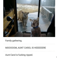 Animals, Family, and Fucking: Family gathering.  MO000OM, AUNT CAROL IS HEEEEEERE  Aunt Carol is fucking ripped Follow my other account @x__social_butterfly_x if you love animals 🐶🐱❤