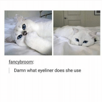 Funny, Memes, and Tumblr: fancy broom  Damn what eyeliner does she use Follow us for more funny tumblr & textposts!!