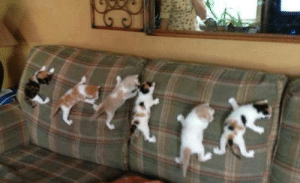 Tumblr, Blog, and Happy: fandomsandconservativelogic:  joilieder:  Spidercats in training.  The kittens tag is a happy place.