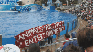 """fangirltothefullest:  dora-wont-explore:  frozen-void:  linddzz:  only-1-a:  twowandsandadrink:  astral-nexus:  vegan-xicano:  prettynymph:  Sea world should be wiped the fuck out  Seaworld, zoos, circuses  Always reblog, spread the message.  no no zoos zoos do good things zoos help rehabilitate animals who otherwise would not survive in the wild zoos help protect animals that would otherwise be hunted down and zoos give them care to keep them healthy seaworld and circuses (involving animals) those are the ones that are bad  Are aquariums still considered good? Cuz ours has a bunch of sea animals that were brought in due to injuries, and that seems like a good thing to help them out until they can go back in the ocean.  Aquariums function like aquatic zoos IF they are non-profit and accredited. For instance the National Aquarium does have dolphins BUT last year they stopped doing shows and literally just let the dolphins do what they want. People can come in to watch the dolphins and trainers still are there but now are less """"trainers"""" and more """"human toys."""" Breeding efforts have stopped and they announced they're going to care for their existing pod and play as the POD wants for the rest of their life and after that, no dolphins. Almost all their fish are nearly 20 years old (or less depending on natural life cycle, or MORE… there are a few close to 50) and they also have rehabilitation and release programs for injured animals. Since they are non-profit every bit of money goes to constant improvements in their tanks, research, and conservation efforts. Sea World, despite all their advertising and talk, is a for profit organization that is more concerned with the paychecks than with animal welfare. Baltimore aquarium got a lot of people in with their dolphin shows but they stopped when learning it wasn't best for their animals. Sea World has no such concern.  Learn before you burn  Keep the zoos and aquariums. Fuck sea world and circuses.  Circuses have been getting"""