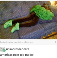 Oh -Raul alrightwhore: fantasticallyweird shit.tumblr.com  unimpressedcats  americas next top model Oh -Raul alrightwhore