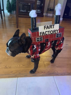 For Halloween: FART  FACTORY  Co  COOPDr  CooPgC For Halloween
