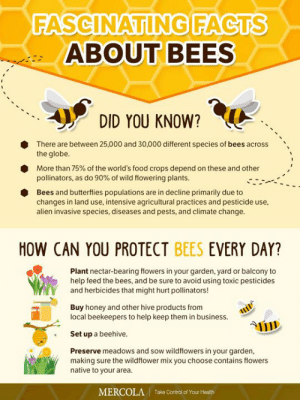 Facts, Food, and Memes: FASCINATING FACTS  ABOUT BEES  DID YOU KNOW?  There are between 25,000 and 30,000 different species of bees across  the globe.  More than 75% of the world's food crops depend on these and other  pollinators, as do 90% of wild flowering plants.  Bees and butterflies populations are in decline primarily due to  changes in land use, intensive agricultural practices and pesticide use,  alien invasive species, diseases and pests, and climate change.  HOW CAN YOU PROTECT BEES EVERY DAY?  Plant nectar-bearing flowers in your garden, yard or balcony to  help feed the bees, and be sure to avoid using toxic pesticides  and herbicides that might hurt pollinators!  Buy honey and other hive products from  local beekeepers to help keep them in business, ui  Set up a beehive.  Preserve meadows and sow wildflowers in your garden  making sure the wildflower mix you choose contains flowers  native to your area.  Take Control of Your Health  MERCOLA When you help save the bees, you're also helping save the world's food supply.