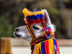 Fashionable Lama (Photo by Diego Delso): Fashionable Lama (Photo by Diego Delso)