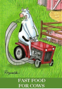 Food: FAST FOOD  FOR Cows