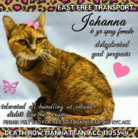 "TO BE KILLED 3/09/2017 1    CAT IS SCHEDULED FOR EUTHANASIA AT THE NYC ACC SHELTERS. THEY DON'T HAVE MUCH TIME LEFT TO LIVE. Please IMMEDIATELY Private Message this page for guidance and assistance****time is critical*** ****NOTE: DO NOT LEAVE OFFERS TOFOSTER OR ADOPT IN THE ""COMMENTS"" SECTION as THEY MAY GET OVERLOOKED****: FAST FREE TRANSPORT  ahahaha  handling at intake  Uke her exam  FINDER FELT BAD FOR HER SO  TOOK HER TO THE NYCACC  DEATH ROMAN MANHATTAN ACC 110554L+ TO BE KILLED 3/09/2017 1    CAT IS SCHEDULED FOR EUTHANASIA AT THE NYC ACC SHELTERS. THEY DON'T HAVE MUCH TIME LEFT TO LIVE. Please IMMEDIATELY Private Message this page for guidance and assistance****time is critical*** ****NOTE: DO NOT LEAVE OFFERS TOFOSTER OR ADOPT IN THE ""COMMENTS"" SECTION as THEY MAY GET OVERLOOKED****"