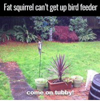 Dank, Ups, and Birds: Fat Squirrel Cantget up bird feeder  come on tubby! This is hilarious to watch. He gets so close! 😂