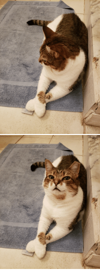 Tumblr, Blog, and Http: fatal-fruit: Spice knows she is wonderful.