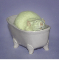 fatgaymccree:Despite All My Chub I Am Still Just A Rat In A Tub: fatgaymccree:Despite All My Chub I Am Still Just A Rat In A Tub
