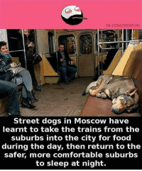 Comfortable, Dogs, and Food: FB.COM/DESIFUN  Street dogs in Moscow have  learnt to take the trains from the  suburbs into the city for food  during the day, then return to the  safer, more comfortable suburbs  to sleep at night. belikebro
