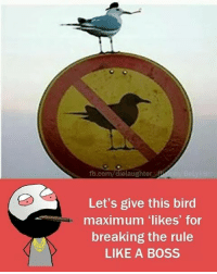 """Memes, 🤖, and Boss: fb.com  ielaughter  Let's give this bird  maximum """"likes"""" for  breaking the rule  LIKE A BOSS"""