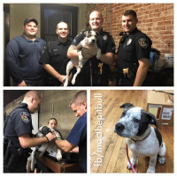 Memes, Pitbull, and Mississippi: fb/macthe pitbull My sissy MagPie went and supported our local Cape Girardeau Police Department at Mississippi Mutts for their dog wash fundraiser. They are looking to hire two new K9 Police Officers and need to raise the funds. I think police officers are heroes. Zayda and MagPie think the boy ones are hotties. BOL!! A special shout out to officer Matt Fisher(we think that is his name, it was kinda busy!). Matt got a pitbull because of us, we inspired him. Zayda even got a new toy from aunt Elizabeth. Spoiled girl. We think today was AWESOME!!!   Love, MacHonored