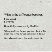 Buddha: fb/the idealist  What is the difference between  I like you &  I love you  Beautifully answered by Buddha  When you like a flower, you just pluck it. But  when you love a flower, you water it daily.  One who understand this, understands life
