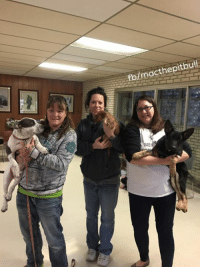 Memes, 🤖, and Mac: fblmacthepitbull Lots of good thoughts Mac Pac, the trio went for their spays and neuters this morning. MagPie with my mom, Gadget with his new mom Lelah, and Skipper with her Foster mama Requi.   Love, MacSnipSnip