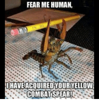 Memes, Fish, and Fear: FEAR ME HUMAN,  I HAVE ACQUIRED YOURYELLOW  COMBAT SPEAR! haha combat spear fearme lobster crawfish fish crazyshit pencil seafood