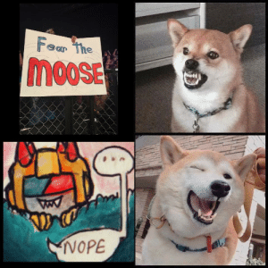 https://t.co/x3rgy6ldMZ: Fear The  moosE  0OSE  NOPE https://t.co/x3rgy6ldMZ