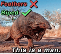 MeIRL, Man, and This: Feathers  Biped  This is a man. meirl