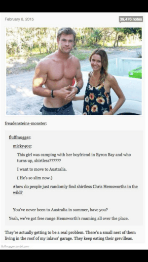 Chris Hemsworth, Monster, and Omg: February 8, 2015  39,476 notes  freudensteins-monster:  fluffmugger:  micky402:  This girl was camping with her boyfriend in Byron Bay and who  turns up, shirtless??????  I want to move to Australia.  (He's so slim now.)  # how do people just randomly find shirtless Chris Hemsworths in the  wild?  You've never been to Australia in summer, have you?  Yeah, we've got free range Hemsworth's roaming all over the place.  They're actually getting to be a real problem. There's a small nest of them  living in the roof of my inlaws' garage. They keep eating their grevilleas. Chris Hemsworthomg-humor.tumblr.com