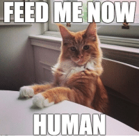 FEED ME NOW  HUMAN Can you plz heat up my milk too?