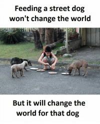 World, Change, and Dog: Feeding a street dog  won't change the world  But it will change the  world for that dog