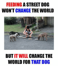 Memes, Streets, and 🤖: FEEDING  A STREET DOG  WON'T CHANGE  THE WORLD  BUT IT WILL  CHANGE THE  WORLD FOR  THAT DOG