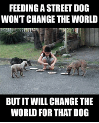Memes, 🤖, and Street Dogs: FEEDING A STREET DOG  WON'T CHANGE THE WORLD  BUTIT WILL CHANGE THE  WORLD FOR THAT DOG