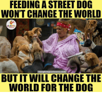 Dogs, Streets, and Indianpeoplefacebook: FEEDING A STREET DOG  WONT CHANGE THE WORLD  LA  aughingcolours com  BUTIT WILL CHANGE THE  WORLD FOR THE DOG For Every Dog Lover.. :)