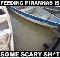 scary: FEEDING PIRANHAS IS  SOME SCARY SH*T