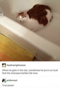 Fall, True, and Power: feedmerightmeow  When he gets in the tub, sometimes he purrs so loud  that the shampoo bottles fall over.  antlersout  True power Chonk power