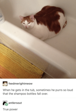 Fall, True, and Power: feedmerightmeow  When he gets in the tub, sometimes he purrs so loud  that the shampoo bottles fall over.  antlersout  True power A cat with unbelievable purring ability