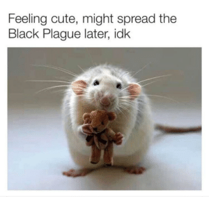 Cute, Dank, and Memes: Feeling cute, might spread the  Black Plague later, idk Idk    . . by nvalenti27 MORE MEMES