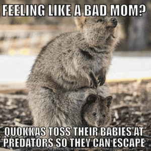 bad mom: FEELING LIKE A BAD MOM?  QUOKKAS TOSS THEIR BABIES AT  PREDATORS SO THEY CAN ESCAPE  DOWNLOAD MEGENERTOR FROM  ECRUNCH CO