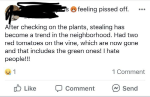 Definitely, Vine, and Animal: feeling pissed off.  S  After checking on the plants, stealing has  become a trend in the neighborhood. Had two  red tomatoes on the vine, which are now gone  and that includes the green ones! I hate  people!!!  1  1 Comment  Like  Send  Comment Couldn't have been an animal. A human definitely stole your crop.