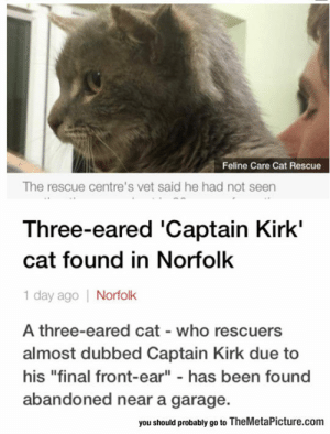 """Captain Kirk, Saw, and Tumblr: Feline Care Cat Rescue  The rescue centre's vet said he had not seen  Three-eared 'Captain Kirk'  cat found in Norfolk  1 day ago Norfolk  A three-eared cat who rescuers  almost dubbed Captain Kirk due to  his """"final front-ear"""" - has been found  abandoned near a garage.  you should probably go to TheMetaPicture.com srsfunny:They Saw Their Chance And They Took It"""