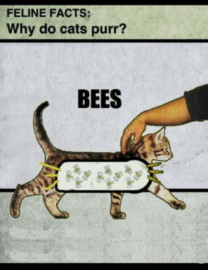Cats, Facts, and Target: FELINE FACTS:  Why do cats purr?  BEES gothegirl:  Of Course!