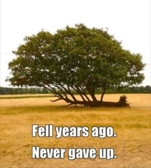 Never,  Ago, and  Years: Fell years ago.  Never gave up. Never give up