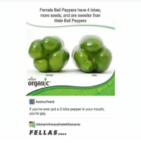 Ironic, Gay, and Pepper: Female Bell Peppers have 4 lobes,  more seeds, and are sweeter than  Male Bell Peppers  Female  Male  merjsas  organ c  回koshurfrank  If you've ever put a 3 lobe pepper in your mouth,  you're gay  fckmeintheassihatethisname  FELLAS....
