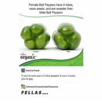 Girl Memes, Gay, and Pepper: Female Bell Peppers have 4 lobes,  more seeds, and are sweeter than  Male Bell Peppers  Female  Male  merjisas 6  organ c  koshurfrank  If you've ever put a 3 lobe pepper in your mouth,  you're gay  fckmeintheassihatethisname  FELLAS.... y'all eating pepper nut