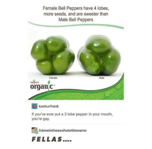 Interesting: Female Bell Peppers have 4 lobes,  more seeds, and are sweeter than  Male Bell Peppers  Female  Male  mel ssat  organ c  koshurfrank  If you've ever put a 3 lobe pepper in your mouth,  you're gay  fckmeintheassihatethisname  FELLAS.... Interesting