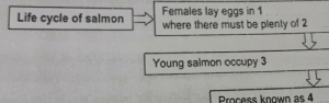 """The salmon in my homework said """"females"""". Is he a neckbeard?: Females lay eggs in 1  where there must be plenty of 2  Life cycle of salmon  Young salmon occupy 3  Process known as 4 The salmon in my homework said """"females"""". Is he a neckbeard?"""