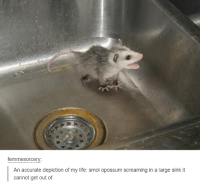 Life, Humans of Tumblr, and Opossum: femmesorcery:  An accurate depiction of my life: smol opossum screaming in a large sink it  cannot get out of