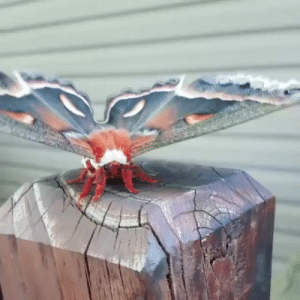 feniczoroark:  randomnightlord:  the-awkward-turt: essence-of-nature:   The way those wings move!    Fun fact! Lepidopterans (butterflies and moths) and most other insects fly by flexing/deforming their thorax causing the wings to move. There aren't actually any muscles attached to the wings themselves. Damselflies and dragonflies do have muscles attached directly to the base of the wings which is why they can fly Like That.    Congrats you met Mothra  A nice Möth  LÄMP BRÖTHER: feniczoroark:  randomnightlord:  the-awkward-turt: essence-of-nature:   The way those wings move!    Fun fact! Lepidopterans (butterflies and moths) and most other insects fly by flexing/deforming their thorax causing the wings to move. There aren't actually any muscles attached to the wings themselves. Damselflies and dragonflies do have muscles attached directly to the base of the wings which is why they can fly Like That.    Congrats you met Mothra  A nice Möth  LÄMP BRÖTHER