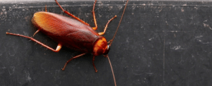 Bad, Protein, and Tumblr: feniczoroark:  tilthat:  An international team of scientists sequenced a protein crystal located in the midgut of cockroaches in 2016. The reason? Scientists think cockroach milk could be the next superfood.  Hi yes what the fuCK ARE YOU THINKING   HOW DO YOU MILK A COCKROACHoh.OH.No. No.NO. BAD. NO.