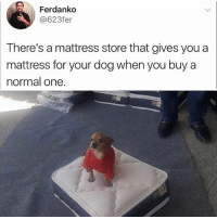 Animals, Cute, and Cute Animals: Ferdanko  @623fer  There's a mattress store that gives you a  mattress for your dog when you buy a  normal one. The perfect mattress store doesn't exi- 😳😵 tag someone and follow me @v.cute.animals 👈❤️