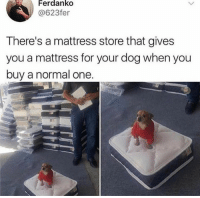 Dank, Mattress, and 🤖: Ferdanko  @623fer  There's a mattress store that gives  you a mattress for your dog when you  buy a normal one ❤️