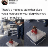 Mattress, Dog, and One: Ferdanko  @623fer  There's a mattress store that gives  you a mattress for your dog when you  buy a normal one.