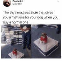 Funny, Mattress, and Dog: Ferdanko  @623fer  There's a mattress store that gives  you a mattress for your dog when you  buy a normal one.  eca Now this is a company I can support! https://t.co/4D6A4fRON1