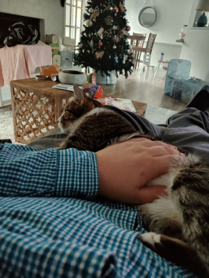 Never, Cat, and Think: FEX I think I have the cutest lap cat. Never seen a cat this needy.